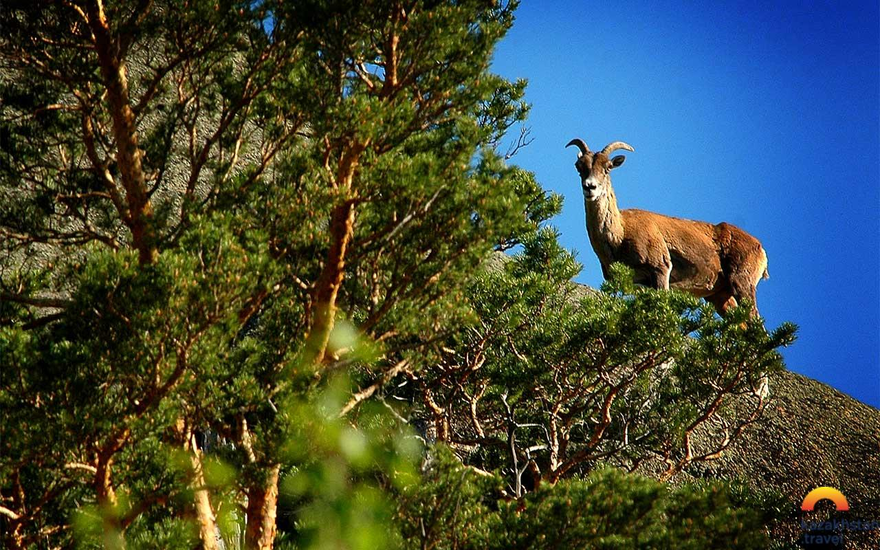 Kyzyltau Nature Reserve